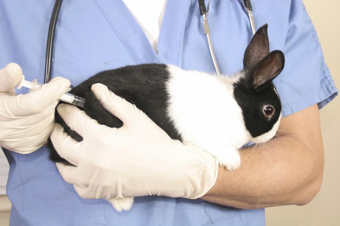 Вакцинация кроликов и хорьков