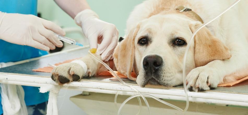 Стерилизация собачек